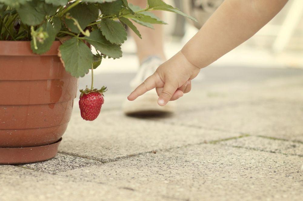 10 tips om gezonde voeding aantrekkelijk te maken voor kinderen