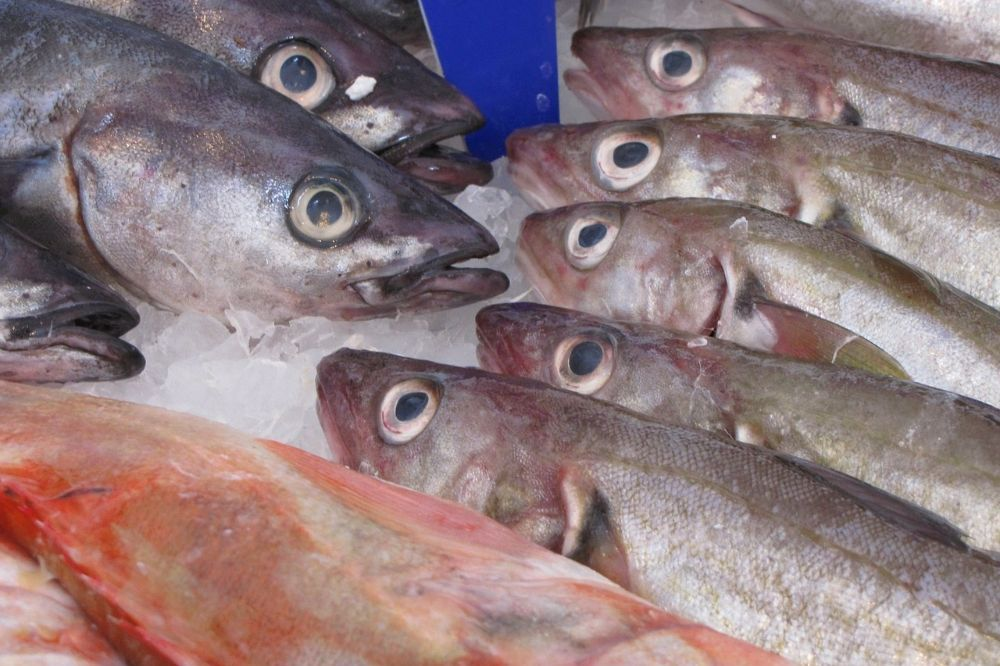 Lekkere gerechten met duurzame vissoorten