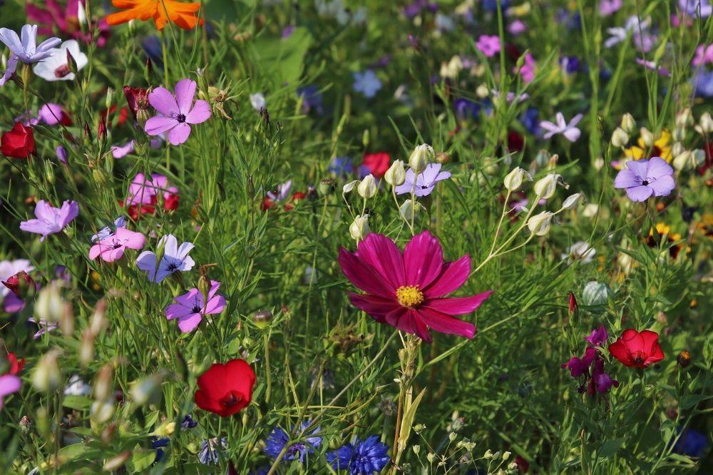 Zet je tuin in voor een beter milieu