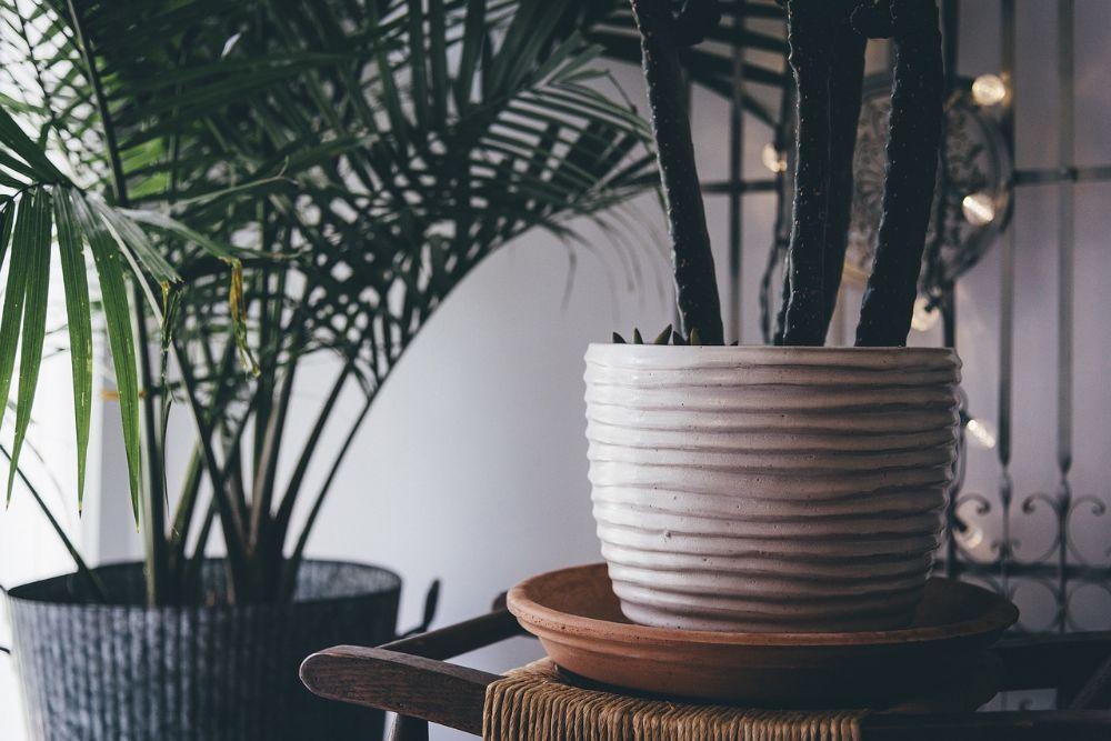 Zo creëer je een groene oase binnenshuis